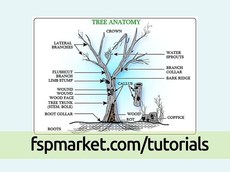 آناتومی درخت