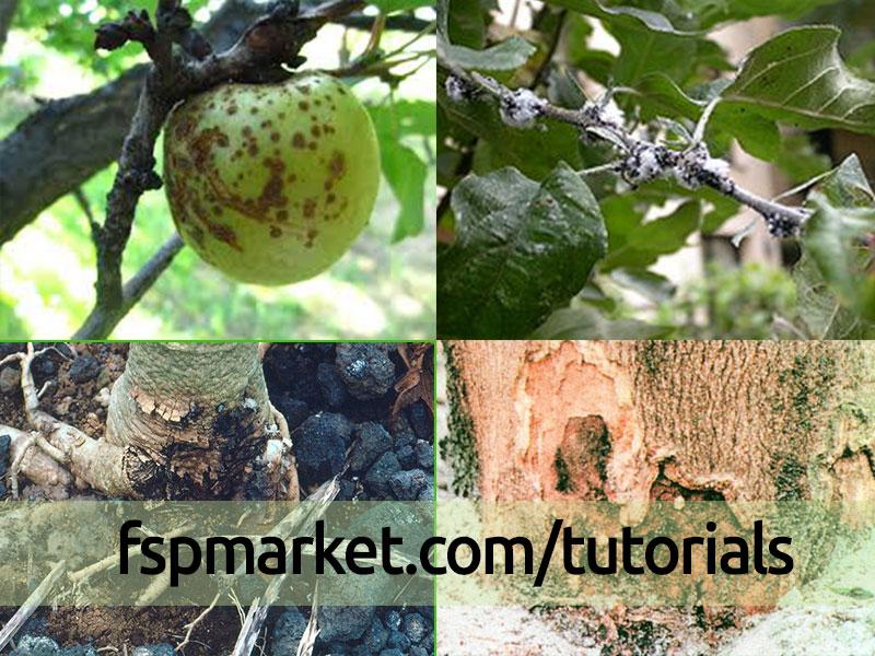 علائم پوسیدگی ریشه در باغ