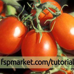 آفات گوجه فرنگی