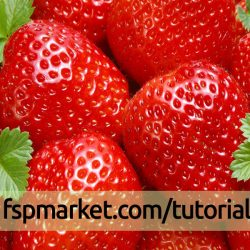 نحوه کاشت توت فرنگی