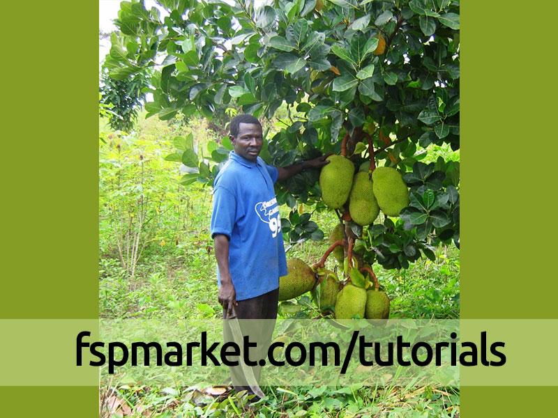 عجیب ترین بدبوترین بزرگترین و خوشمزه ترین میوه دنیا جک فروت