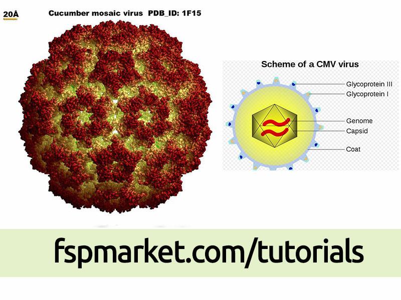 ویروس موزاییک خیار