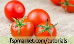 مدیریت تغذیه و آبیاری در گوجه فرنگی
