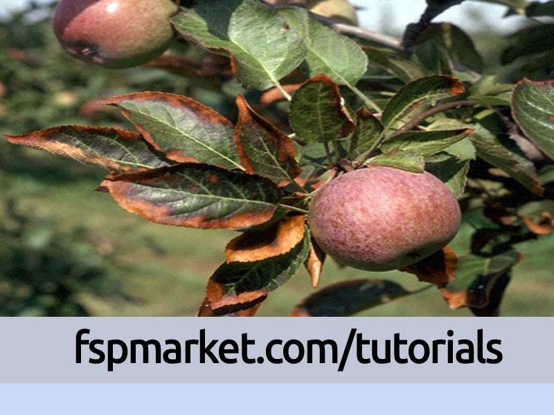 مسمومیت ناشی از زیادی کلسیم در سیب
