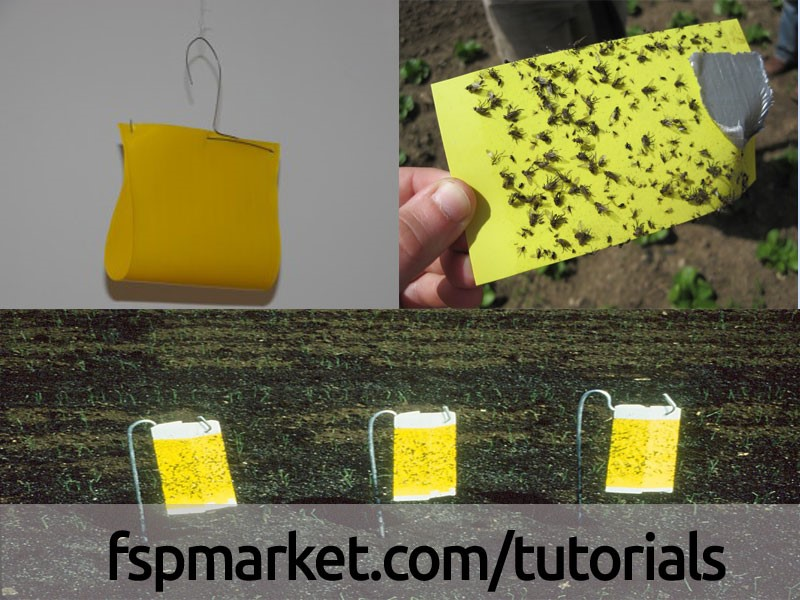 استفاده از نوار و تله های زرد رنگ برای کنترل مگس جوانه پیاز