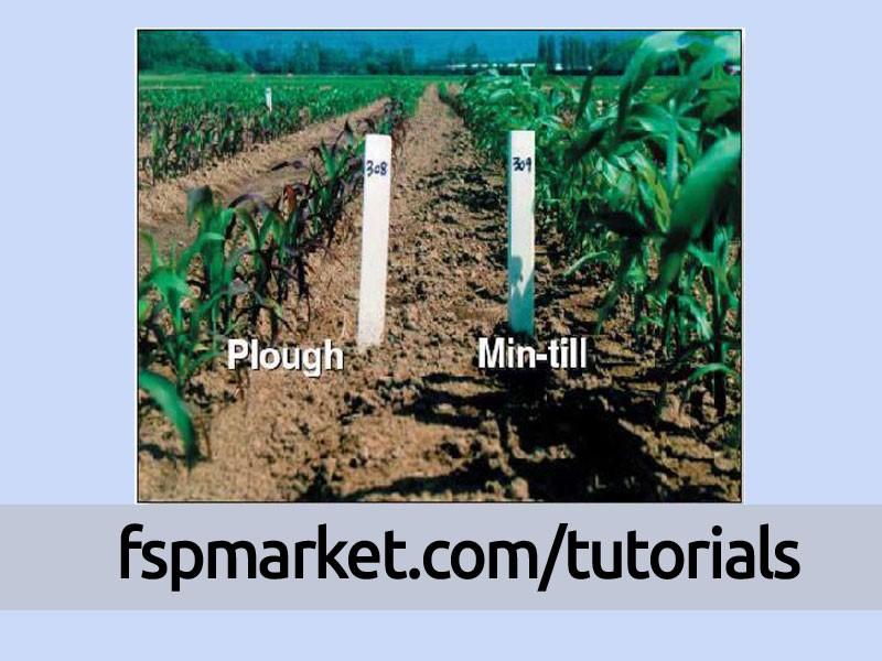 رشد ذرت در سیستم کم خاک ورزی در مقایسه با شخم معمولی