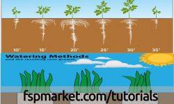 عوامل فیزیولوژیکی موثر بر ریشه زایی