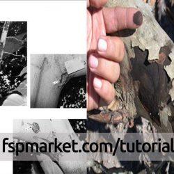 بیماری سر خشکیدگی شاخه و مرگ درختان مرکبات (ناتراسیا)