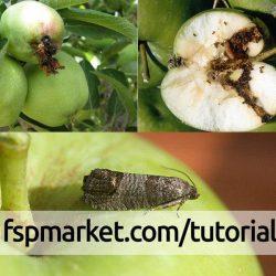 معرفی مهم ترین آفات سیب