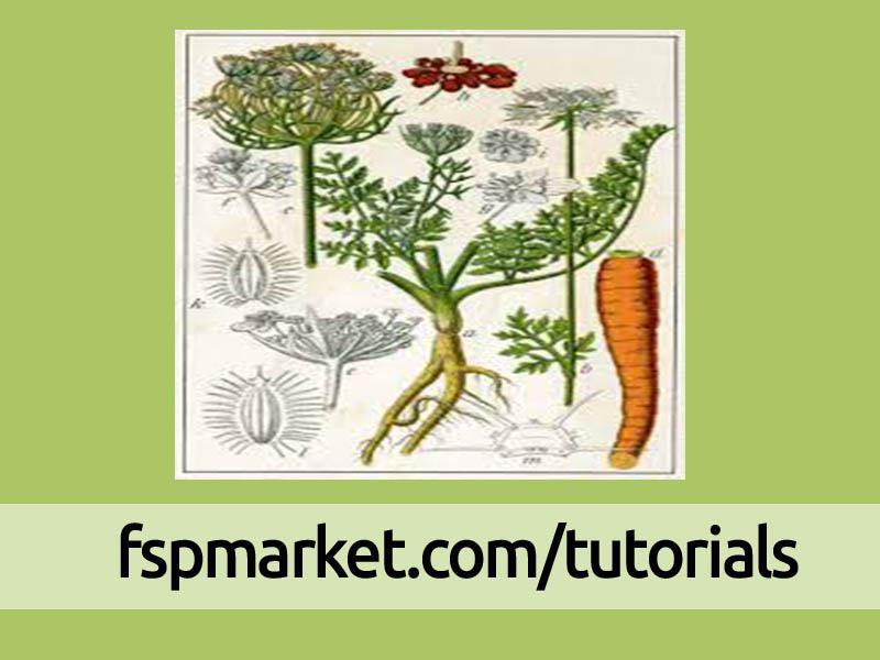 بخش های مختلف گیاه هویج