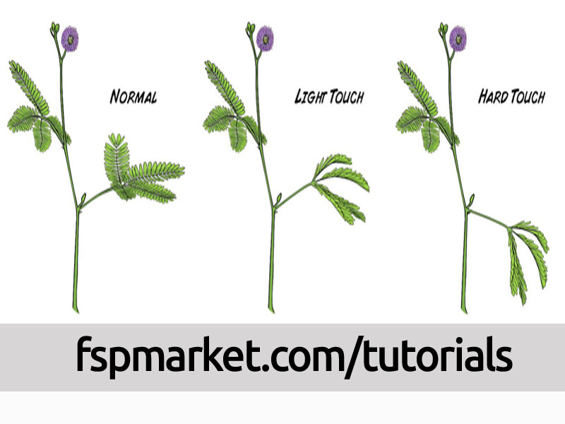 مکانیسم قهر کردن گل قهر چیست؟