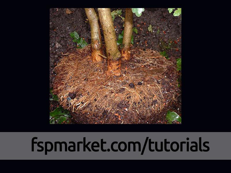 پر کردن سطح صفحه توسط ریشه