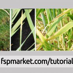 نقش سه عنصر اصلی ازت، فسفر و پتاس در رشد و نمو گندم